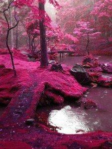Amazing-natura